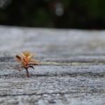 【小さい秋】