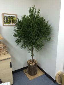 北山杉クリスマスツリー(Step1)