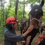 【Horse Logging】