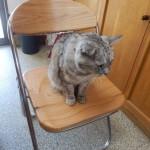 【座りごこちはいかが?】
